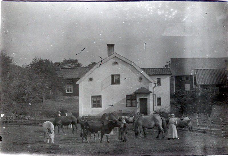 087  Hus och kor