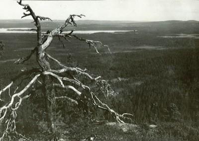 Utsikt från Flenberget