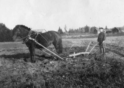 På åkern 1913
