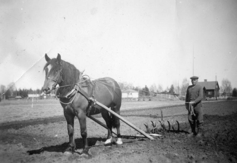 Arbete med häst