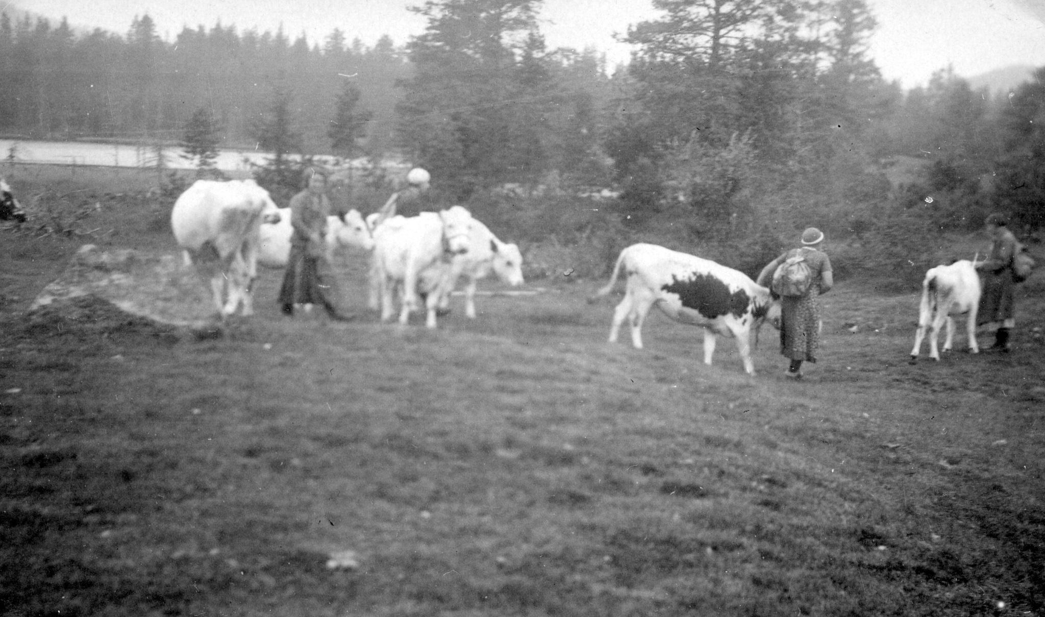 Hemfärd från Sälen 1935