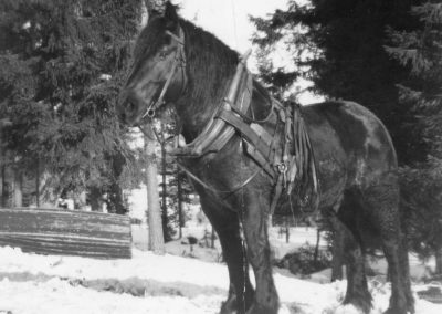 Vacker häst