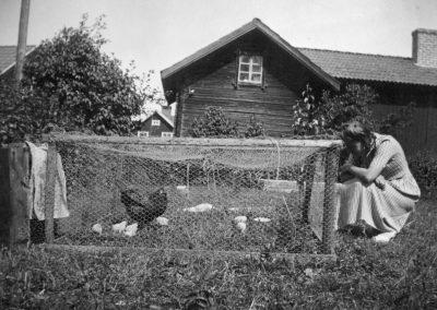 Hönor och kycklingar