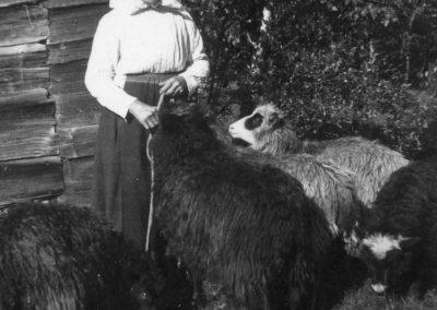 Kvinna med får